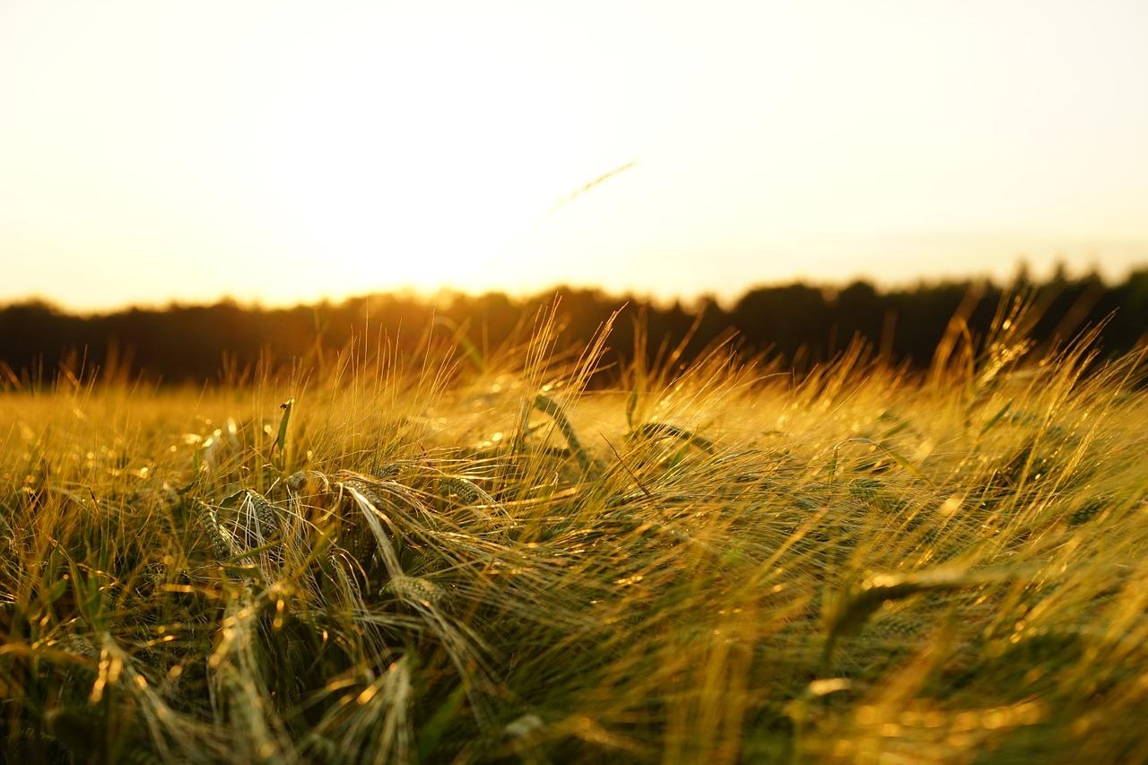 Skład fungicydów – jaki jest najlepszy?