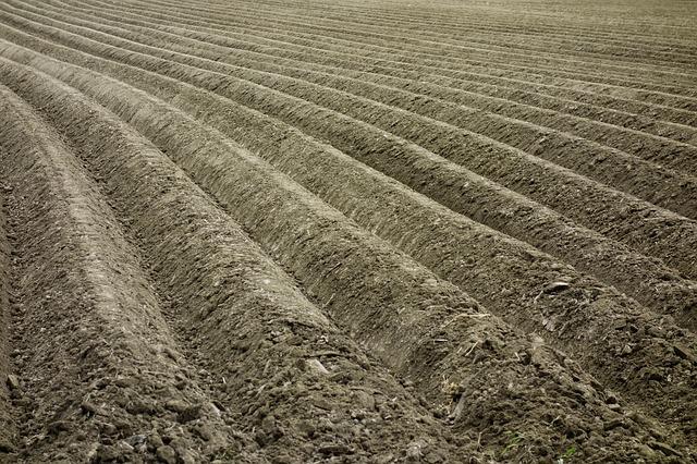 Najlepsza ochrona herbicydowa ziemniaków