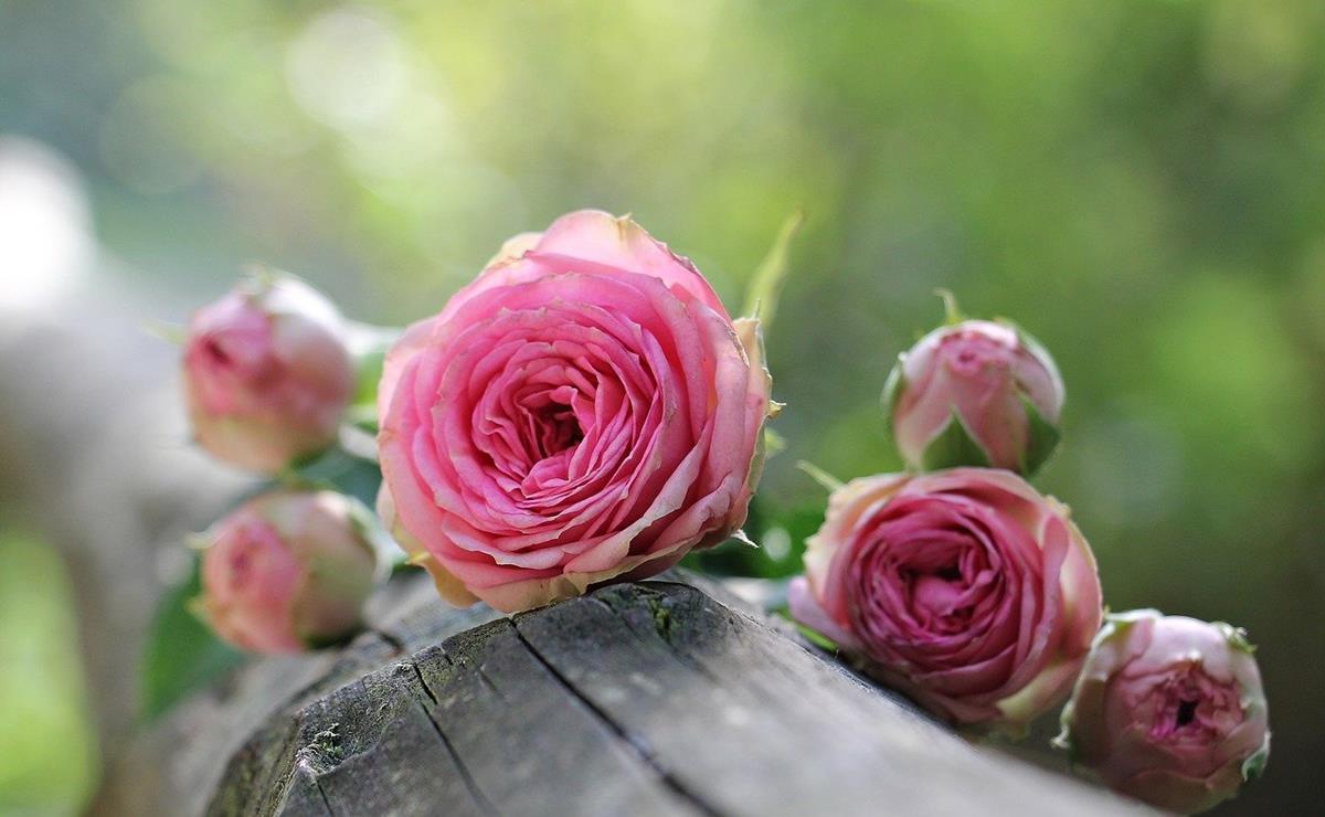 Jak wygląda zamawianie kwiatów przez internet?
