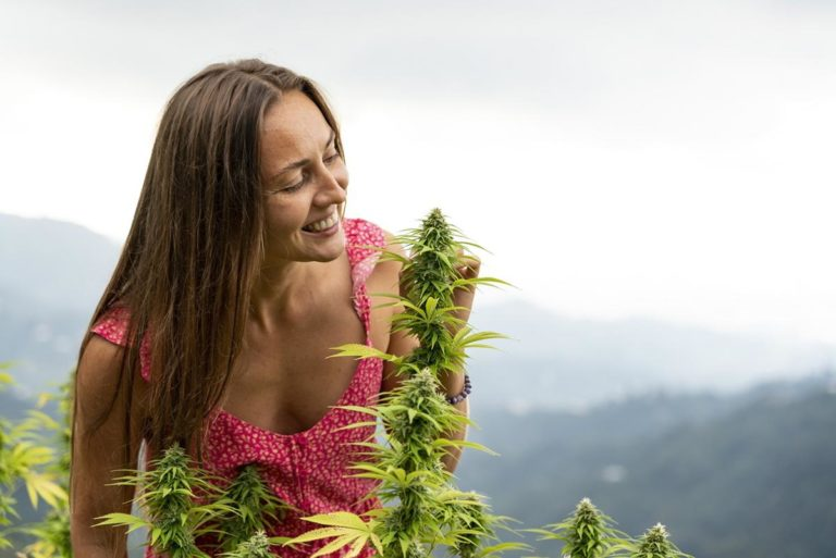 Co ma znaczenie przy wybieraniu poszczególnych nasion marihuany?